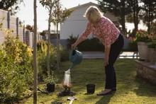 Smiling Senior Woman Watering Plant In Garden