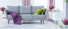 Grey Couch With Purple Blanket...