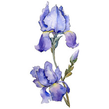 Purple Iris. Floral Botanical ...