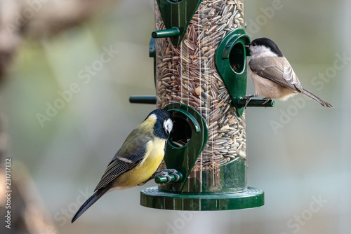 Fotografie, Tablou Closeup of birds eating out of a seed feeder