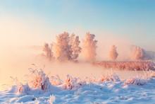 Sunny Xmas Nature