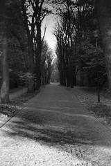 czarno białe droga w parku