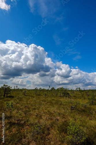Fotobehang Landschap empty swamp landscape with water ponds and small pine trees
