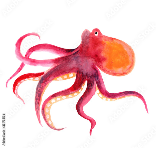 Fotografie, Obraz  Pink octopus isolated on a white background, watercolor
