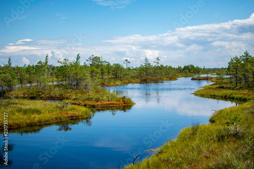 Foto op Aluminium Blauw empty swamp landscape with water ponds and small pine trees