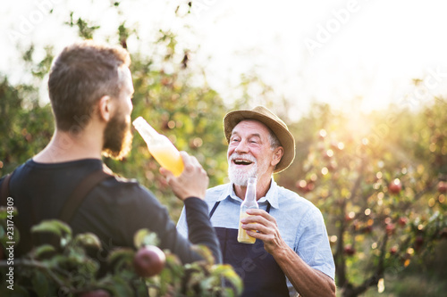 Leinwand Poster A senior man with adult son holding bottles with cider in apple orchard in autumn