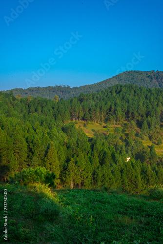 Fotobehang Landschap Sunrise - Landscape of tree Forest in Bageshwar, Uttrakhand,