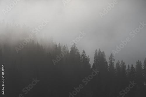 Fototapety, obrazy: Tannen im Nebel