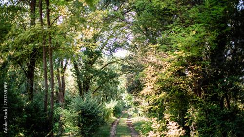 Spoed Foto op Canvas Weg in bos Chemin dans la forêt
