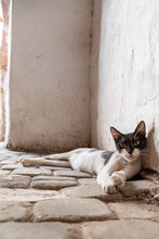 Black And White Cat Lying Down On Cobblestone