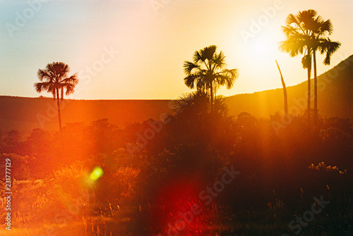 Deurstickers Ochtendgloren Palm Trees, Sunrise and Light Leaks Background