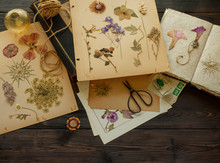 Pressed Flowers On A Book And Table.