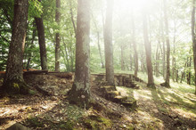 Sun Shining In Old Forest With Ancient Steps