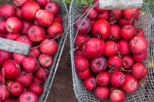 Photo  Drahtgitter Metallkorb mit roten leckeren frischen saftigen gesunden Äpfeln Apfe