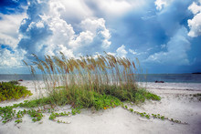 Sea Oats On A Summer Day