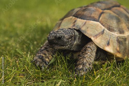 Foto op Aluminium Schildpad Schildkröte