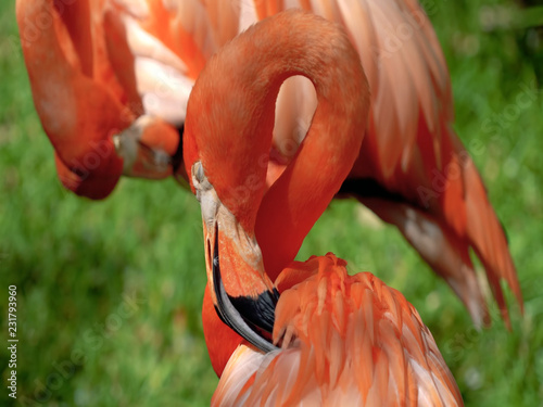 Tuinposter Flamingo flamingo in zoo