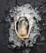 A Royal Miyagi Oyster Rests On A Bed Of Ice On A Black Surface.
