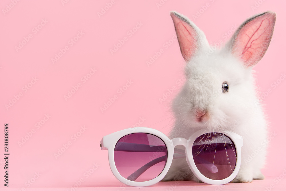 Fototapety, obrazy: Cute bunny rabbit on pink background with fashionable pair of glasses.