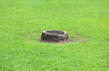 Coconut Stump On Green Grass Garden In Park. Cut Off Dried Coconut Palm Tree.