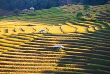 Terraced Rice Field In Pabongp...