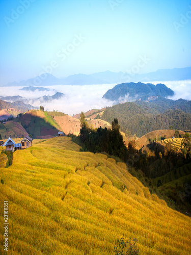 Spoed Foto op Canvas Honing Terraced Rice Field in Pabongpiang Chiangmai Thailand.