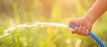 Hand Holding Water Hose And Watering To The Plant In Outdoor Garden