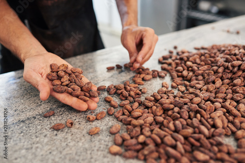 Fotomural  Worker hand sorting cocoa beans in an artisanal chocolate factory