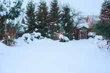 Winter Snowy Garden View With Conifers And Wood Shed