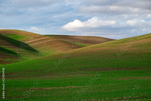 Spoed Foto op Canvas Blauwe hemel landscape with green field and blue sky