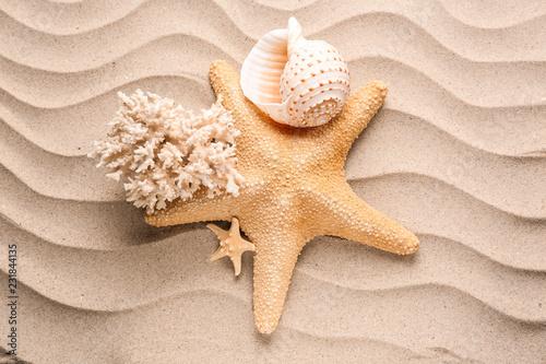 Starfish with sea shells on sand