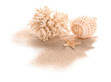 Seashell, Starfish, Coral And Sand On White Background