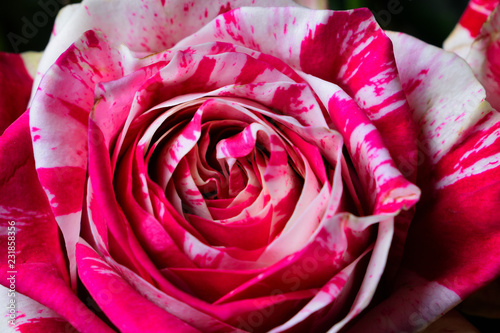 Rose Fleur Romantique Amour Buy This Stock Photo And Explore