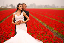 Bride And Groom In A Flower Field Among The Red Tulips