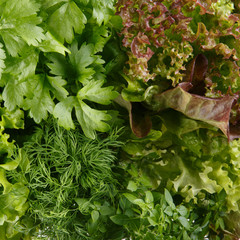 FototapetaFresh aromatic culinary herbs as a background. Lettuce, dill, leaf celery and small leaved basil.