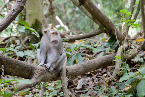 Foto op Plexiglas Aap monkey sitting on a branch in the Park