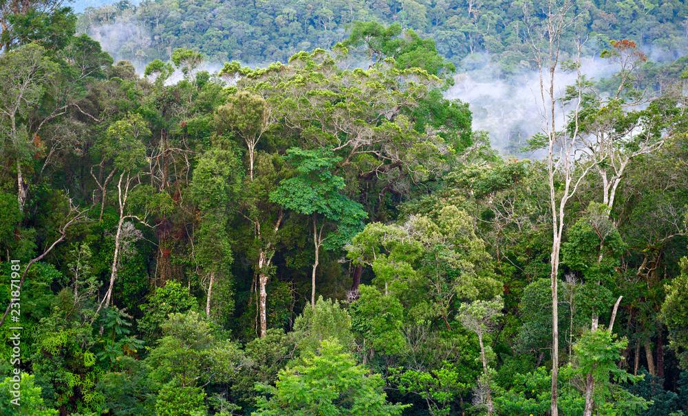 Fototapeta Tropical forest after rain