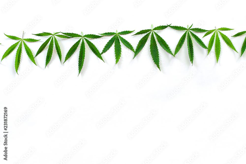Fototapety, obrazy: Green cannabis leaves, marijuana on white background. Hemp, ganja leaf. Top view, image wallpaper close up