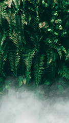 Fototapeta Do pokoju Vertical garden with tropical green leaf with fog and rain, Dark tone