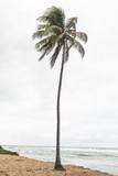Kokosowe drzewo w Bahia - 231885320