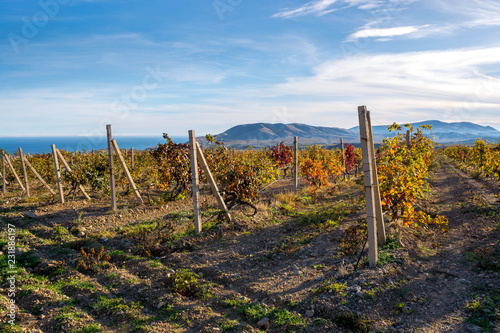 Foto op Canvas Wijngaard Autumn Vineyard