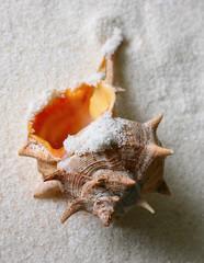 Fototapeta Shell