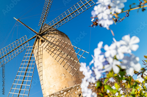 Historic windmill of Es Jonquet in old town of Palma de Mallorca, Mallorca, Balearic Islands, Spain