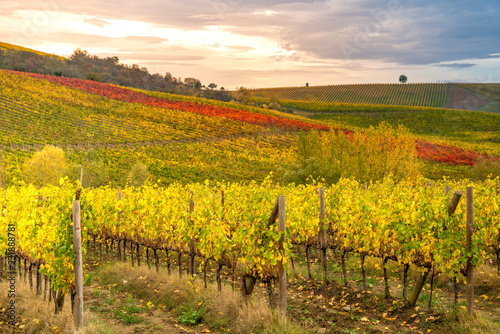 Keuken foto achterwand Wijngaard Chianti region, Tuscany. Vineyards at sunset in autumn. Central Italy