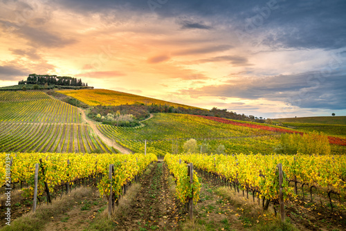 Poster Melon Chianti region, Tuscany. Vineyards at sunset in autumn. Central Italy