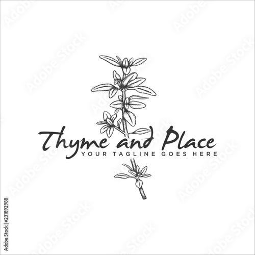 Foto Handrawn herb thyme vector illustration