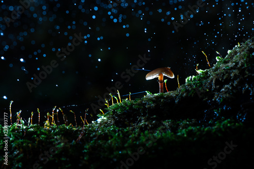 Photo Stands Lavender Rainy day in the autumn forest with falling raindrops and shiny water drops on a lighted mushroom