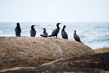 Punta Del Diablo Uruguay Birds