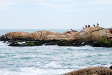 Punta Del Diablo Uruguay Birds On The Rocks