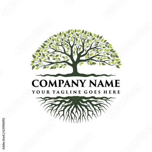 Fotografija  Abstract vibrant tree logo design, root vector - Tree of life logo design inspir